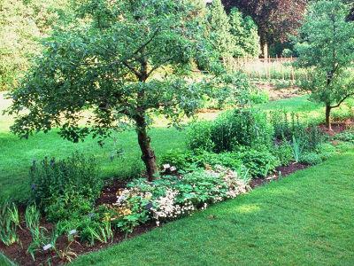 Zakwaszanie gleby pod rododendrony