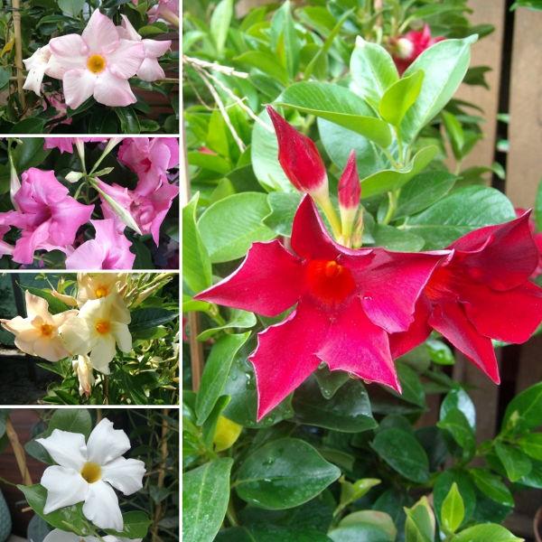 Co Posadzić W Donicach Na Tarasie 7 Doskonałych Roślin