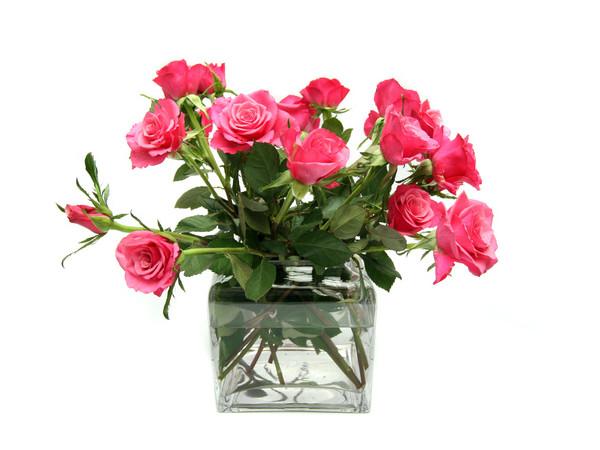 Co Zrobić żeby Róże Dłużej Stały W Wazonie