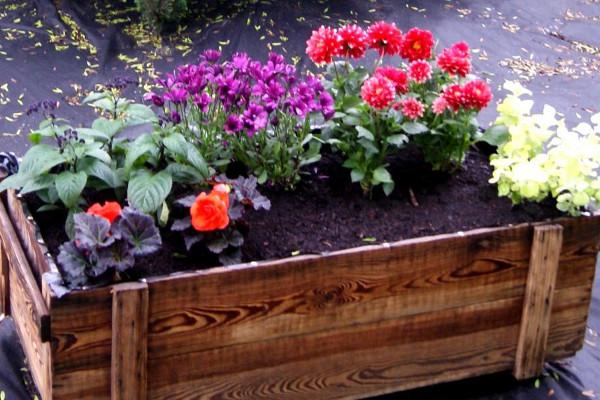 Drewniana Skrzynka Na Kwiaty Jak Zrobić Co Posadzić W