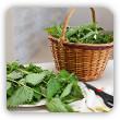 Жидкий навоз, отвар, варево - экологические средства защиты растений