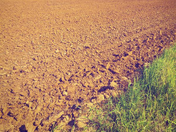 Gleba piaszczys... Gleba