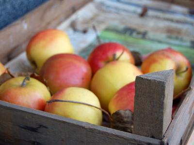 Jak przechowywać jabłka na zimę