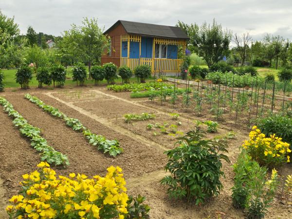 Jak Zaplanować Ogród Warzywny