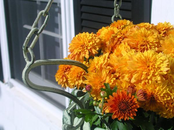 Jesienne Kwiaty Na Balkon