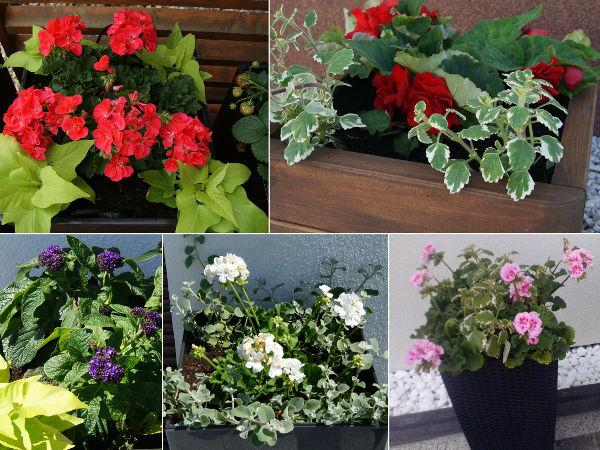 Kompozycje Kwiatowe Na Balkon Przyklady I Zdjecia