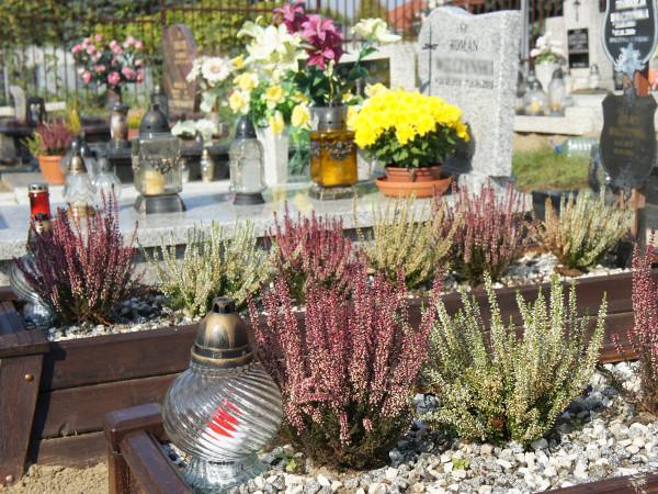 Kwiaty I Rośliny Na Cmentarz