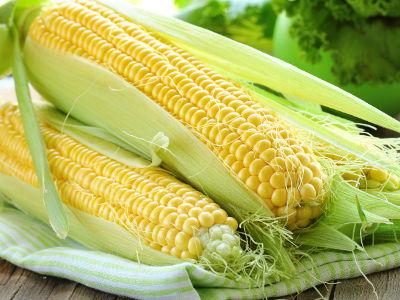 Kukurydza uprawa na działce