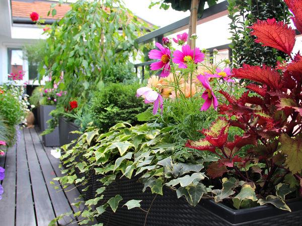 Kwiaty Balkonowe Cieniolubne Co Posadzić Na Balkonie W Cieniu