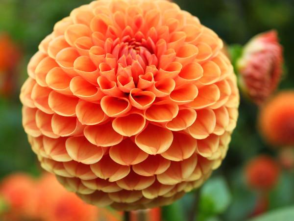 Kwiaty Cebulowe Sadzone Wiosną