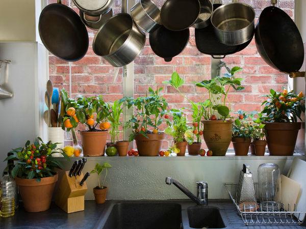 Jakie Kwiaty Doniczkowe Nadają Się Do Kuchni