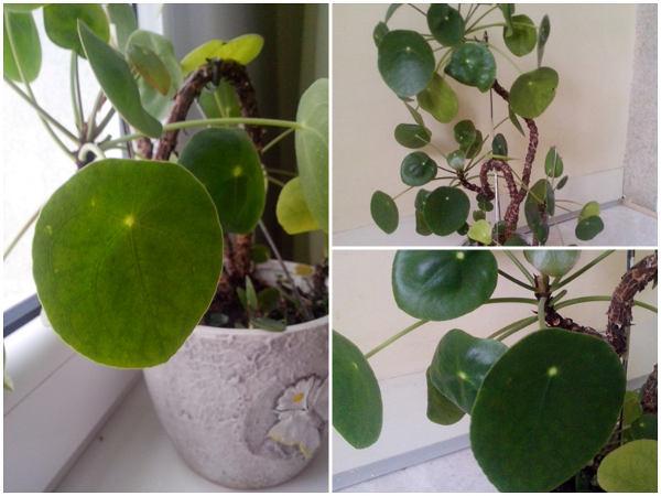 Unikalne Kwiaty doniczkowe do biura - jakie wybrać, zdjęcia, opisy YL18