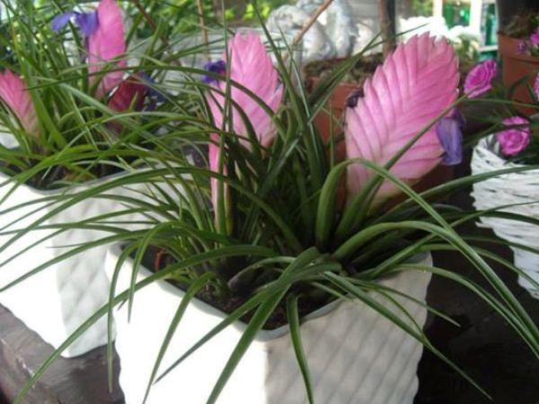 Kwiaty Doniczkowe Na Prezent