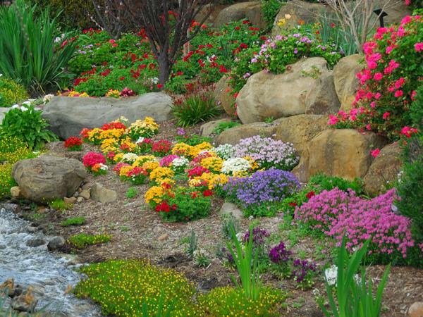 kwiaty-na-skalniak-dlugo-kwitnace.jpg