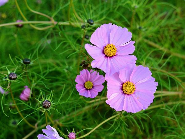 Kwiaty Ogrodowe łatwe W Uprawie