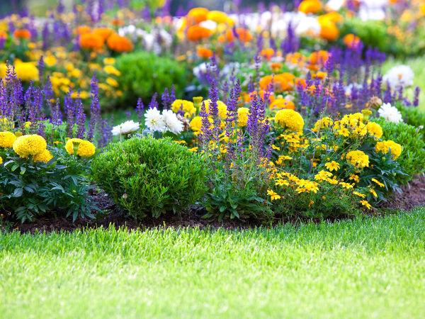 Kwiaty Ogrodowe Latwe W Uprawie