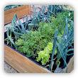 Warzywa W Doniczkach Uprawa Jakie I Kiedy Sadzić