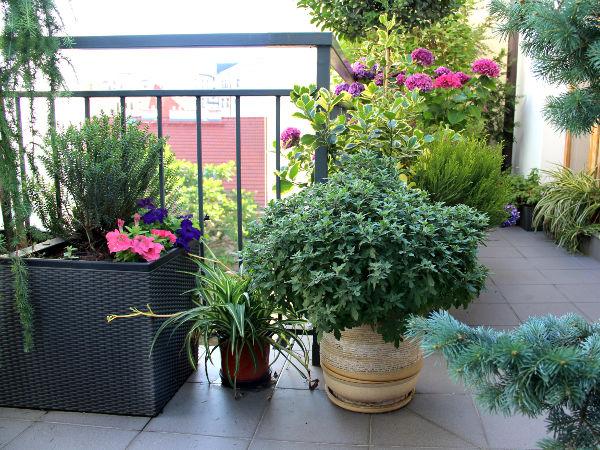 Rośliny Balkonowe Całoroczne
