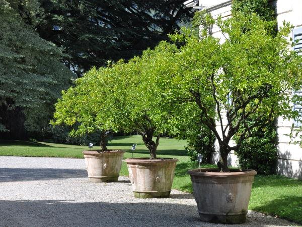 Rośliny Do Dużych Donic Ogrodowych