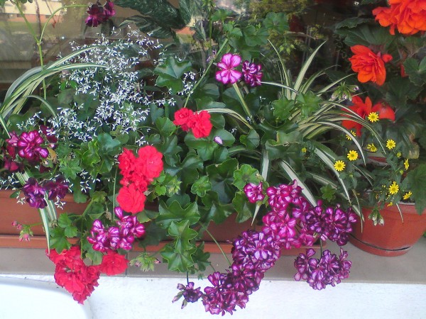 Kwiaty Na Słoneczny Balkon