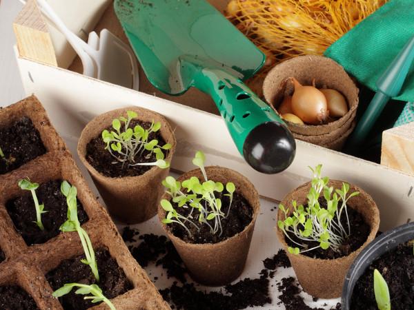 Torf Ogrodniczy Rodzaje Zastosowanie Cena