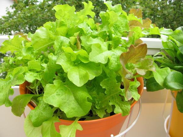Warzywa Na Balkonie Uprawa Krok Po Kroku