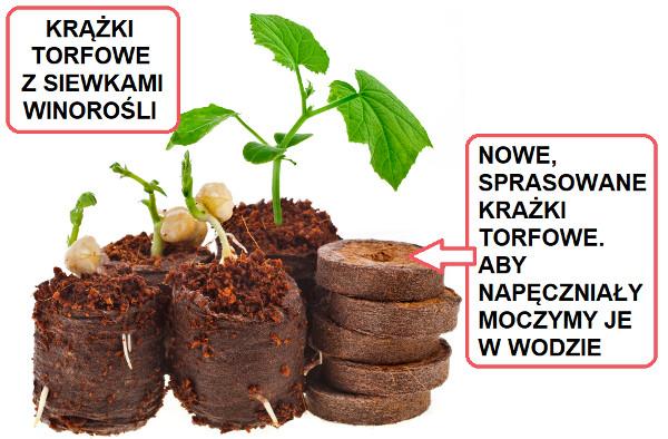 Wysiew Nasion W Domu Krążki I Doniczki Torfowe
